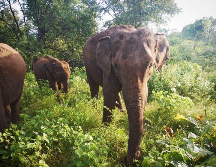 Yala  Vs. Udawalawe National Park