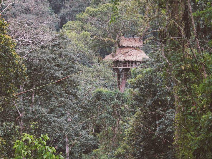 Amazing Gibbon Experience
